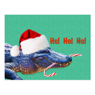 Christmas, Alligator with Santa Hat Postcard