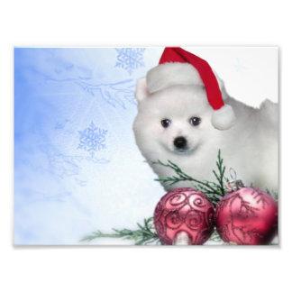 Christmas American Eskimo dog Photo Art