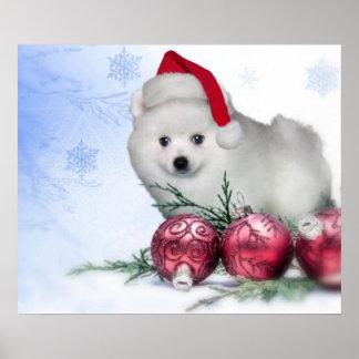 Christmas American Eskimo dog Poster