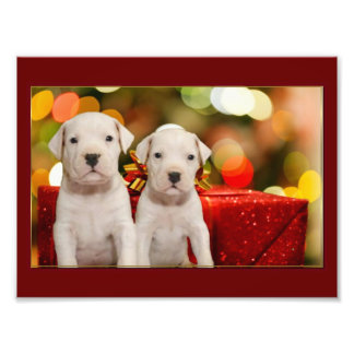Christmas Argentine Dogo puppies Art Photo