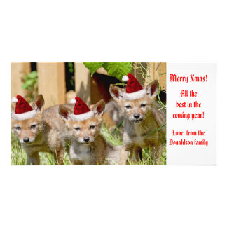 Christmas Baby Coyote Photo Picture Card