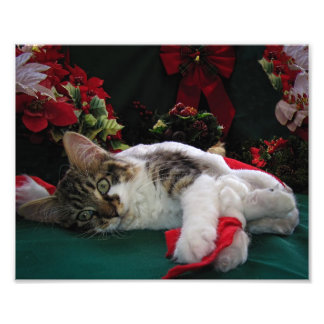Christmas Baby Kitty Cat, Large Eyed Kitten Alone Photo Print