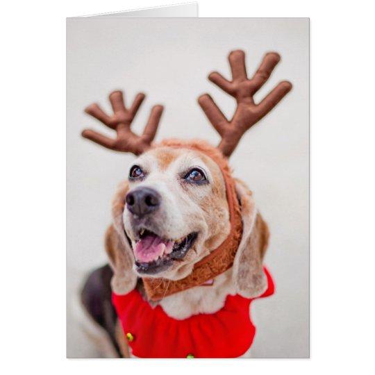 Christmas Beagle dog with festive reindeer ears Card