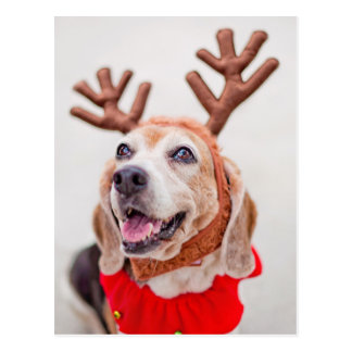 Christmas Beagle dog with festive reindeer ears Postcard