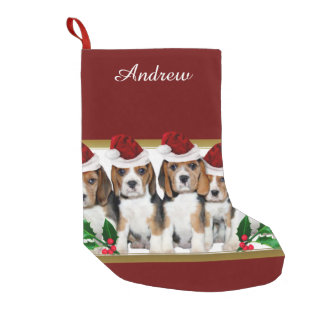 Christmas Beagle puppies