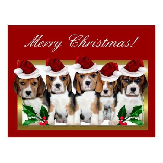 Christmas Beagle puppies postcard