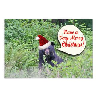 Christmas Bear Photograph
