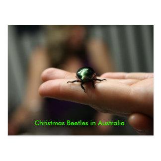 Christmas Beetle Postcard