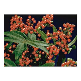 Christmas berry tree (Schinus terebinthifolius) 13 Cm X 18 Cm Invitation Card