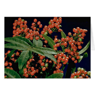 Christmas berry tree (Schinus terebinthifolius) Greeting Card