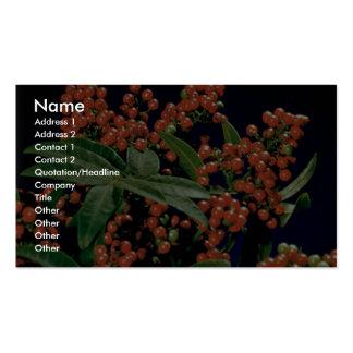 Christmas berry tree (Schinus terebinthifolius) Pack Of Standard Business Cards