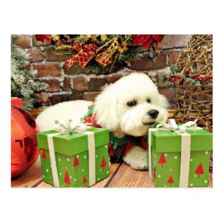 Christmas - Bichon Frise - Cooper Postcard
