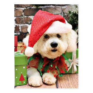 Christmas - Bichon Frise - Daisy Postcard