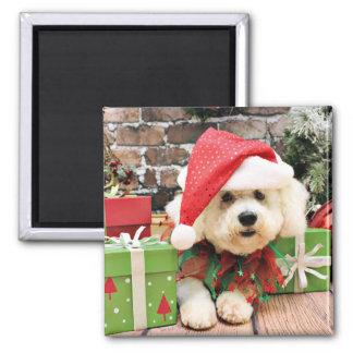Christmas - Bichon Frise - Daisy Square Magnet