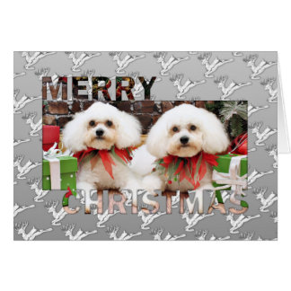 Christmas - Bichon Frise - Harry and Hermie Card