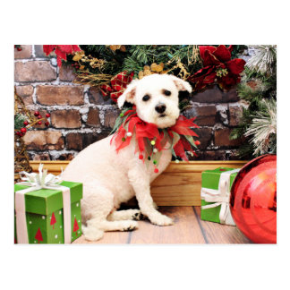 Christmas - Bichon Frise - Holly Post Card
