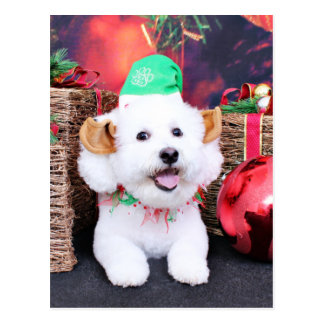 Christmas - Bichon Frise - Jack Post Card
