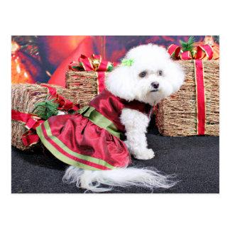 Christmas - Bichon Frise - Mia Post Card
