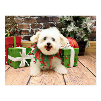 Christmas - Bichon Frise - Missy Postcard
