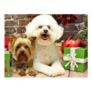 Christmas - Bichon Frise - Mori - Yorkie - Max Postcards