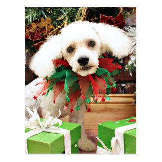 Christmas - Bichon Frise - P.J. Post Cards