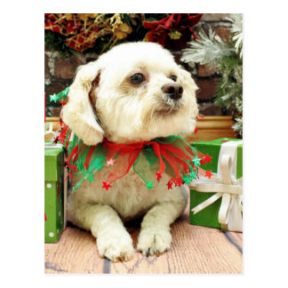 Christmas - Bichon Frise - Woody Post Cards