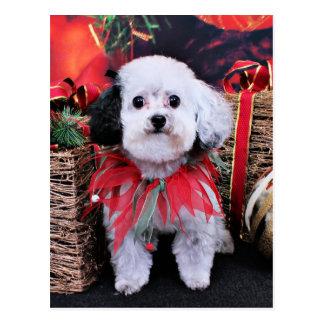 Christmas - Bichon Frise X - Panda Post Card