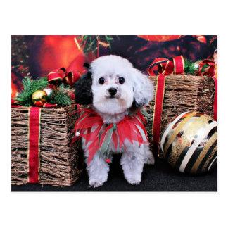 Christmas - Bichon Frise X - Panda Postcard