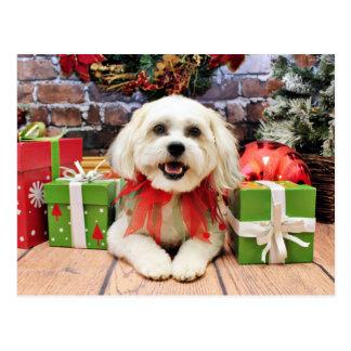 Christmas - Bichon X - Bella Postcard
