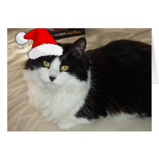 Christmas Black and White Cat Card