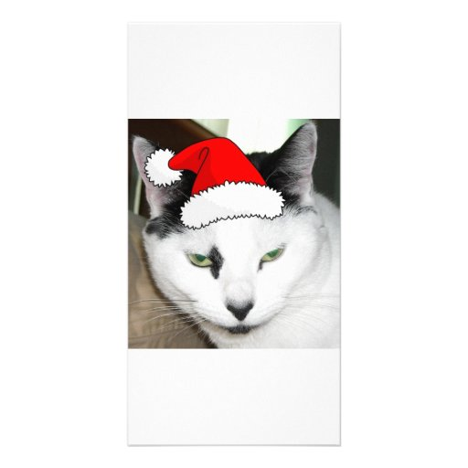 Christmas Black and White Kitten Customized Photo Card
