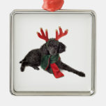 Christmas Black Toy Poodle Dog Dressed as Reindeer