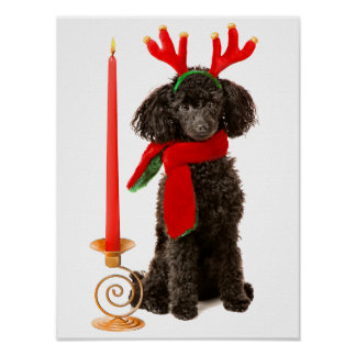 Christmas Black Toy Poodle Dog Dressed as Reindeer Poster