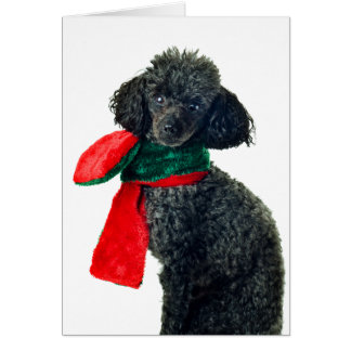 Christmas Black Toy Poodle Dog Reindeer Red Scarf Card