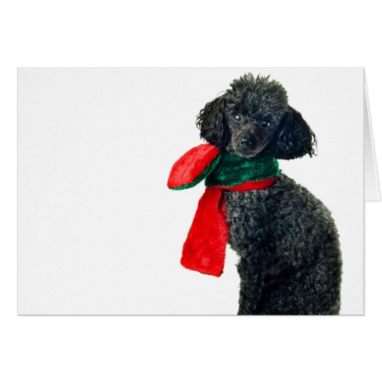 Christmas Black Toy Poodle Dog Reindeer Red Scarf