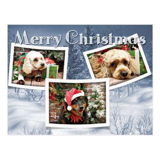 Christmas - Border Collie - Cockapoo Postcard