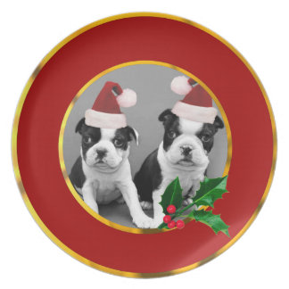 Christmas Boston Terrier puppies Plate