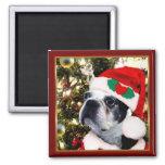 Christmas Boston terrier Square Magnet