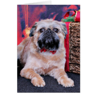 Christmas - Brussels Griffon - Oliver Greeting Card