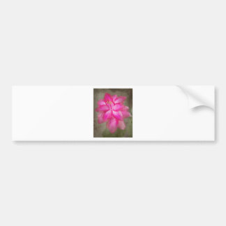 Christmas Cactus Bumper Stickers