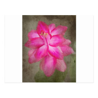 Christmas Cactus Post Card