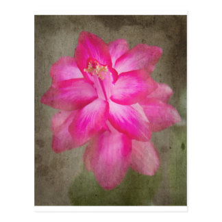 Christmas Cactus Post Cards