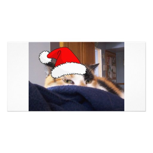 Christmas Calico Cat Photo Cards
