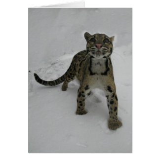 Christmas card - Clouded Leopard