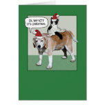 Christmas card: Dog and cat