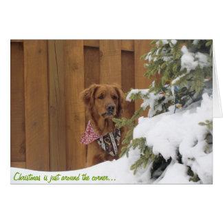 Christmas Card Golden Retriever in Snow