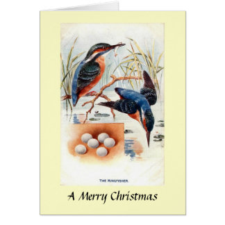 Christmas Card - Kingfishers