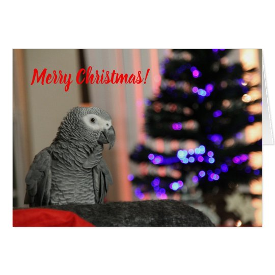 Christmas Card - Lucky Parrot