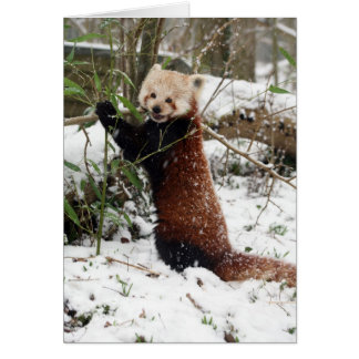 Christmas card - Red Panda 3