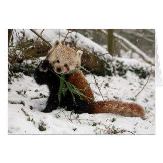 Christmas card - Red Panda 5